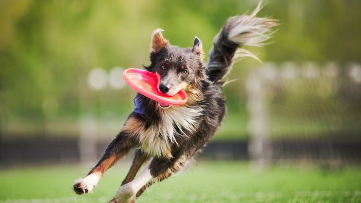 犬の年齢で異なる『適切な運動量』とは?