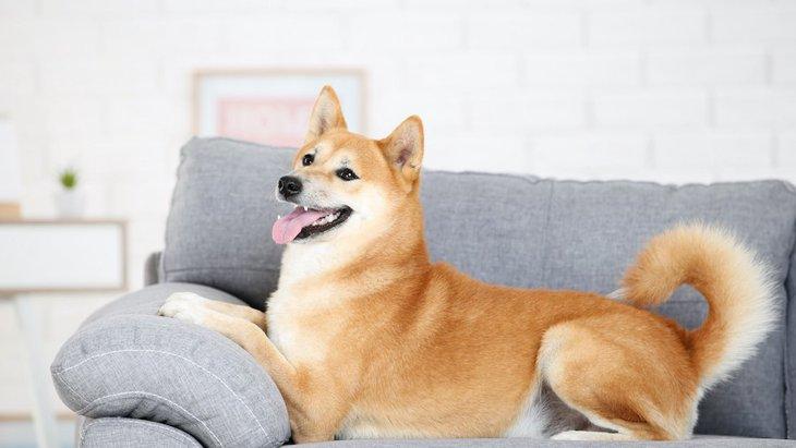 犬が家具をボロボロにしてしまう理由3つ