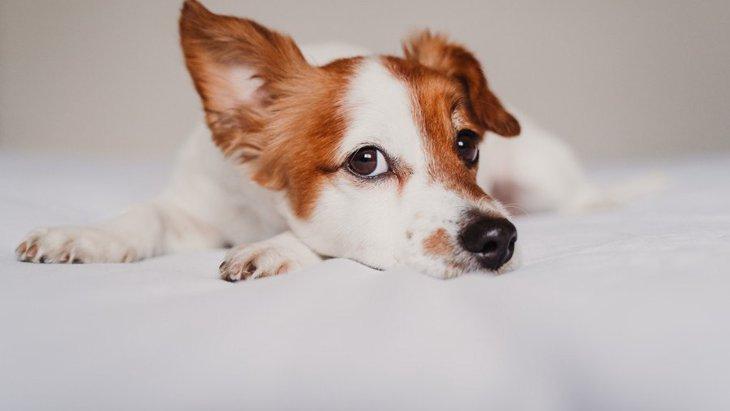 犬には『嫌いな音』がある?注意すべき3つの音や好きな音まで解説