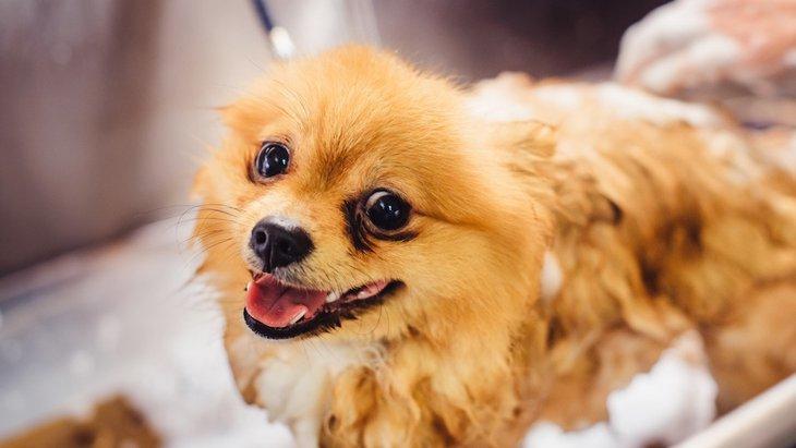 犬が濡れた後に体をブルブルする理由
