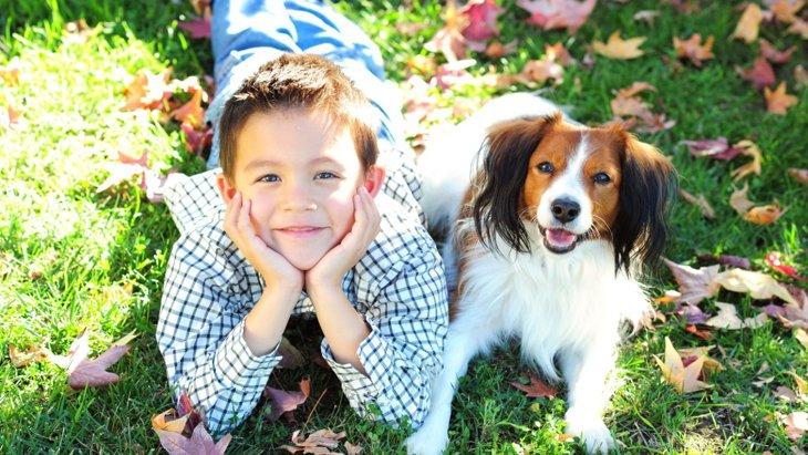 犬と一緒に感情理解、小学生のための動物介在教育モデルの研究