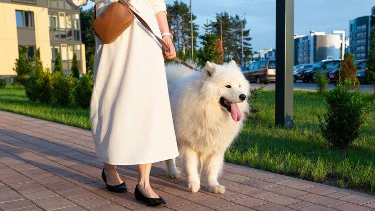 悩ましい犬の散歩とトイレの関係「散歩は散歩、トイレはトイレ」の考え方