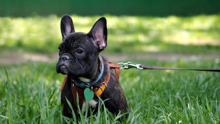 犬の夏の散歩に行く時間帯は何時がベスト?