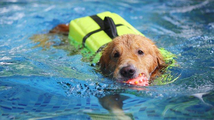 夏に注意!犬との水遊びでしてはいけないNG行為5選