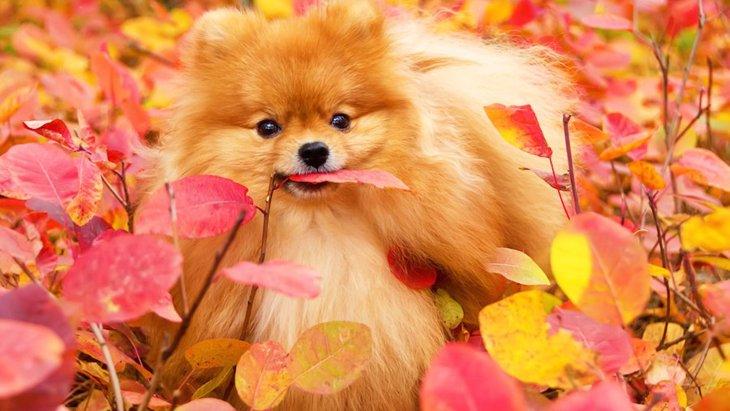 犬と秋を楽しむ方法8つ