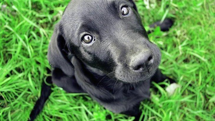 『人見知りな犬』に共通する4つのこと