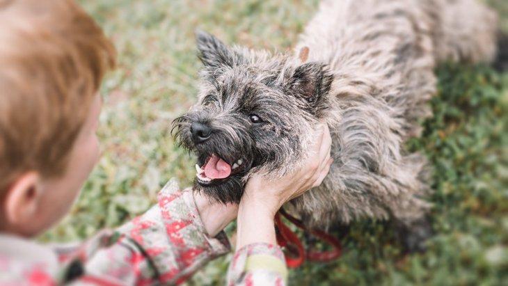 犬が飼い主に『触れてほしい』と言っている時のサイン5選