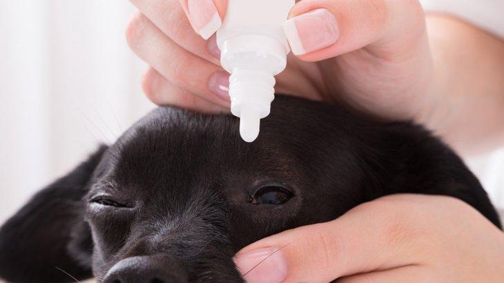 犬に人間用の目薬を使っても大丈夫?