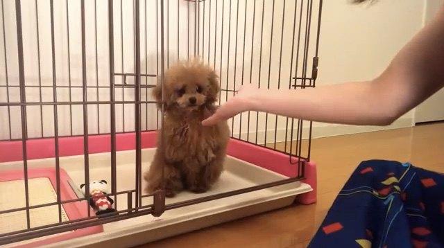 子犬がお家にやってきた!これからよろしくね♪