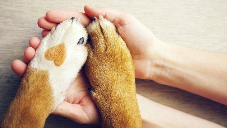 ネットの情報だけで犬の病状を判断する危険性について