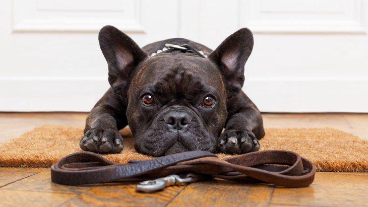 愛犬が散歩を嫌がる5つの理由