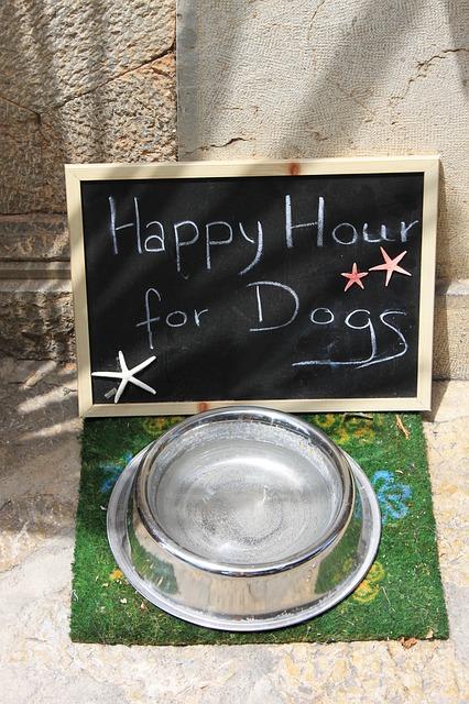 犬が水を飲む量を気をつけましょう