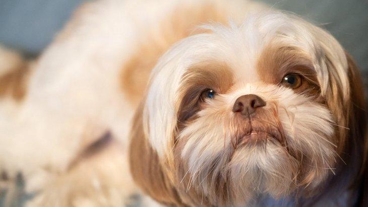 犬からの愛情が消えてしまう絶対NG行為4選