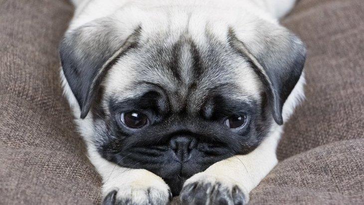 犬のニオイが気になる時の原因4つ!原因別の適切な対処法とは?