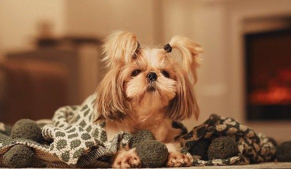 犬が冬に熱中症になる?!飼い主のNG行為が原因に…!
