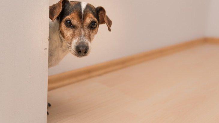 犬がする「構ってアピール」6つの仕草