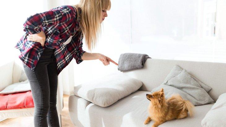 愛犬に『イライラ』してしまう時によくある原因3選 イライラしないための方法は?