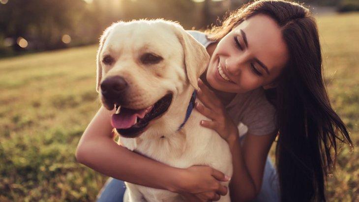 怪我や病気に負けない!愛犬の自然治癒力を高める方法