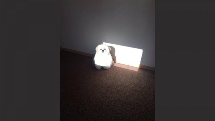 まるで妖精!不思議な雰囲気が魅力の犬「モコゾウくん」が神々しいと話題