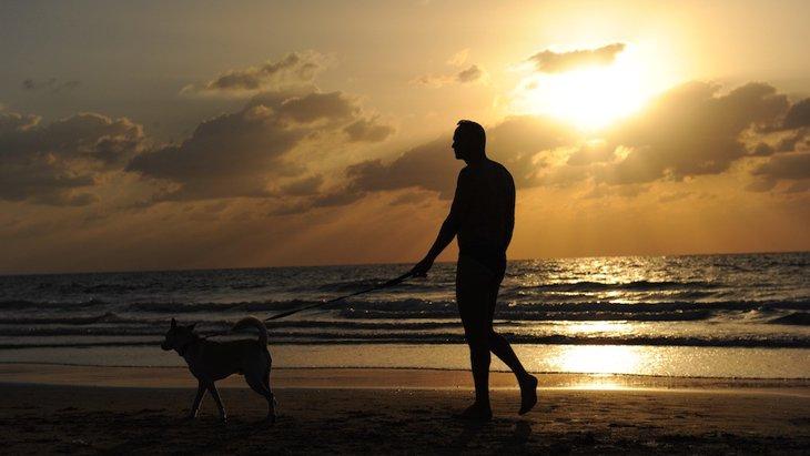 老犬の散歩で飼い主ができるサポート5つ