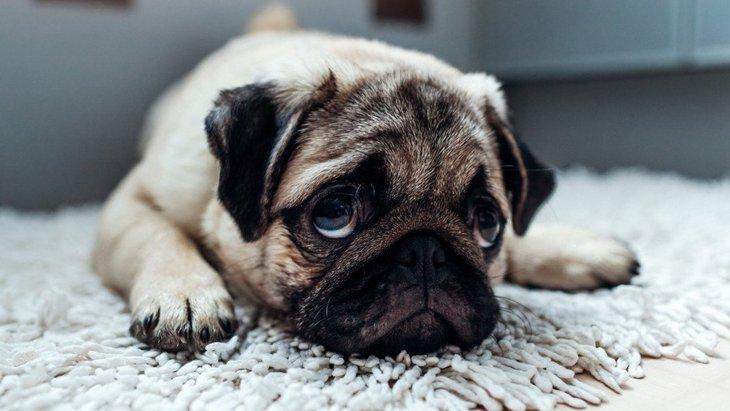 犬が『分離不安症』になってしまうNG行為4選!どんな症状が出るの?
