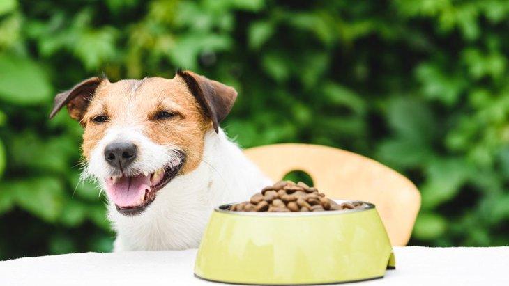愛犬に与えるフード、正確に計量できているでしょうか?【調査結果】