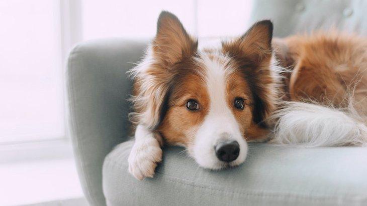 犬が落ち着かない気持ちの時にしている仕草や行動10選