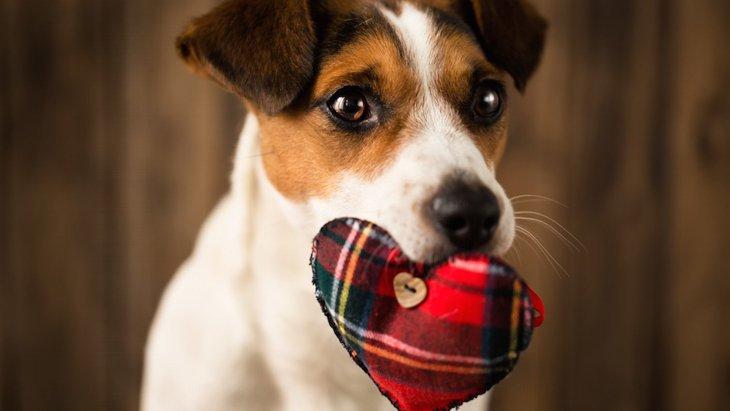 犬との相性を診断する5つのチェック項目