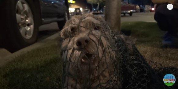 熟睡中の小型犬を網で確保。驚かせて、ゴメン!