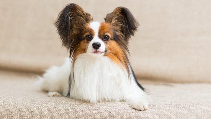 体臭がしにくい犬種3選!体臭を少なくする生活習慣とは?