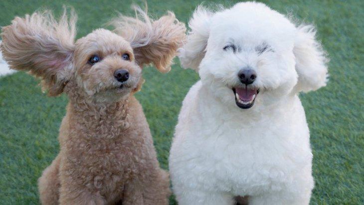 毛がすごいことに…!風が強い日に犬とお出かけする時の注意点5つ