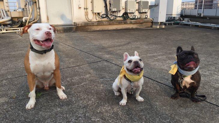 犬のポジティブな感情を生み出すトレーニング法