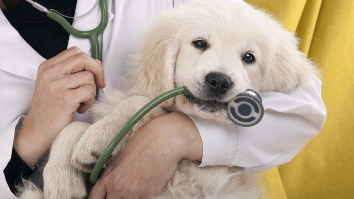 アロペシアX(脱毛症X) 犬の症状や原因、治療法について