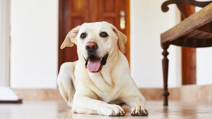 犬が飼い主の帰宅時、大喜びではしゃぐ理由5つ♡