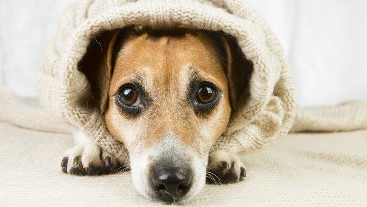 犬への無関心がもたらす6つの問題点