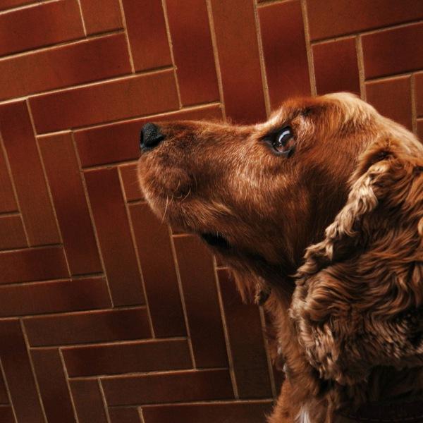 犬のワクチン、各種感染症予防とメリット副作用について
