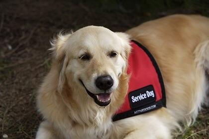 犬の熱中症対策グッズをご紹介!散歩の暑さ対策