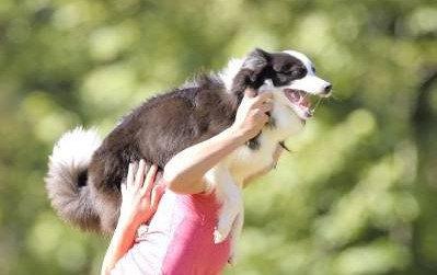 大きなトラウマを植え付けられた子犬。ペットからパートナーになるまで
