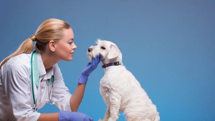 犬の口唇炎の症状や発症の原因、治療法や予防法まで