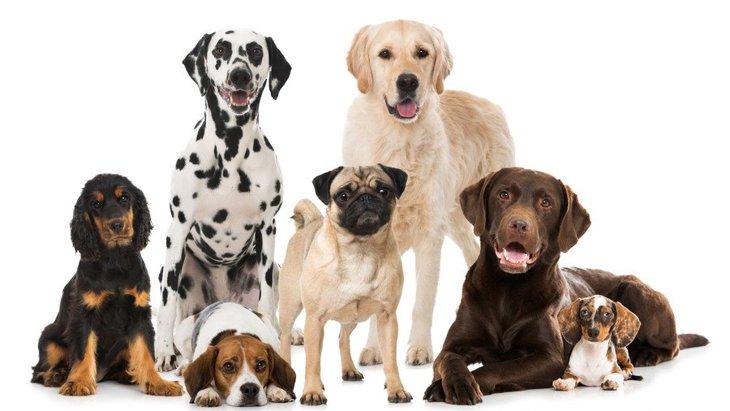 犬にまつわることわざ・慣用句には何がある?日本から海外までを紹介
