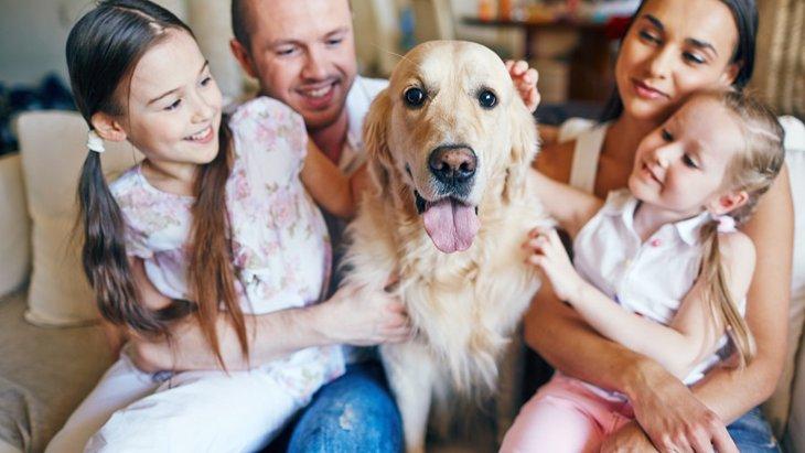 犬が飼い主を守ろうとしている時に見せる3つの仕草や行動