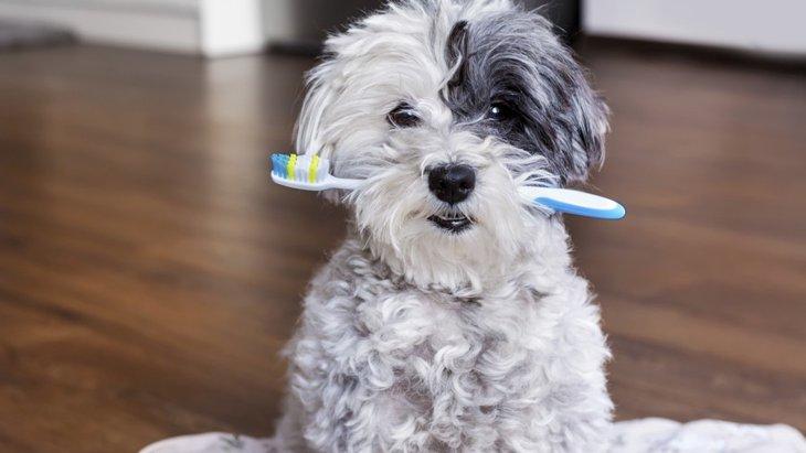 犬に歯磨きをさせるには~3つのアイデア~