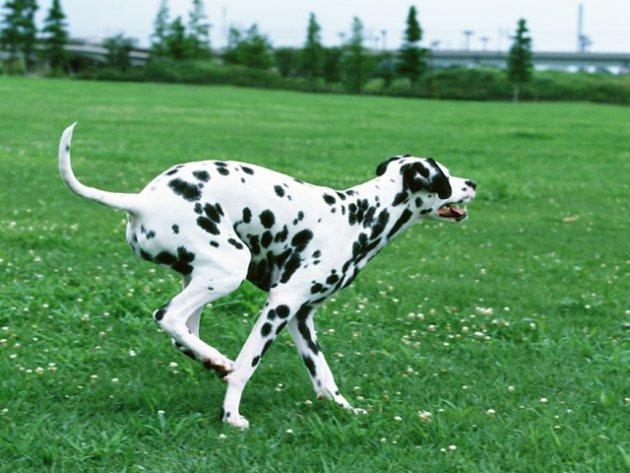 犬に適したダイエット方法について