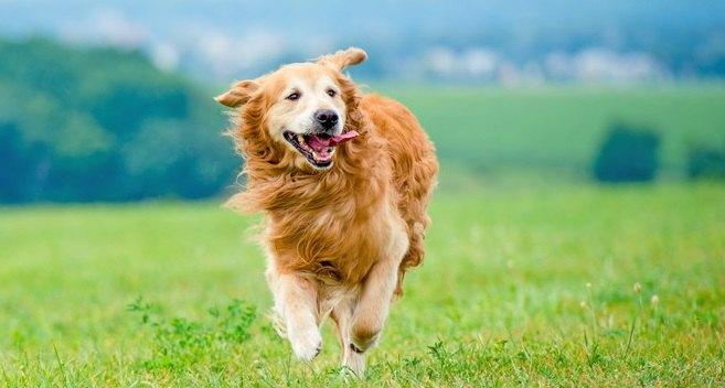犬に長生きをしてもらうコツ4選!毎日の習慣が愛犬の寿命を伸ばすことも!