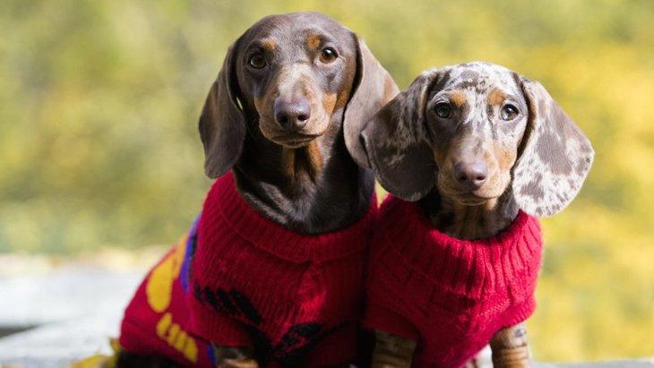 冬におすすめな犬服の種類3選