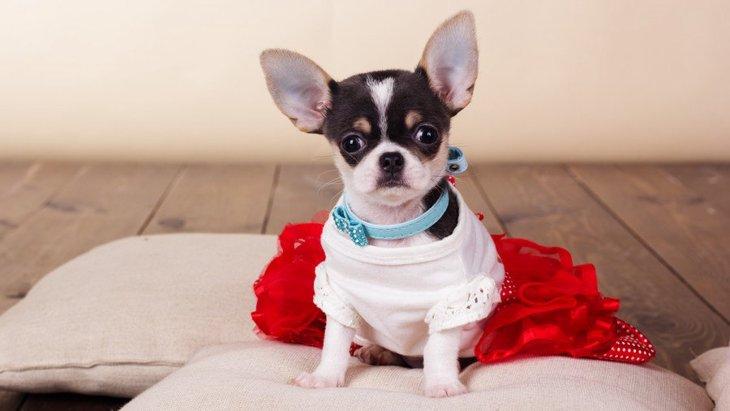 犬服のブランドの人気ランキングTOP9!