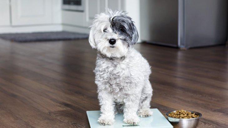 犬の体重を測るときに知っておきたい4つのポイント