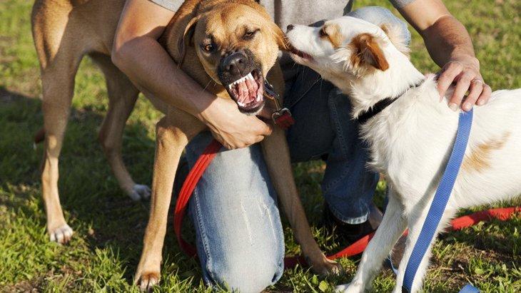優しかった犬が突然凶暴になる理由と対処法