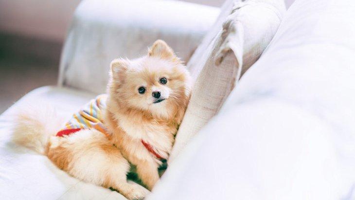 犬のノミダニ対策に『洋服』が効果的?他にはどんな対策をするべき?