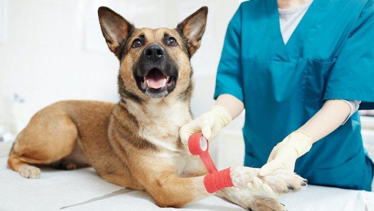 犬が体のどこかに怪我をしている時の仕草や行動8選
